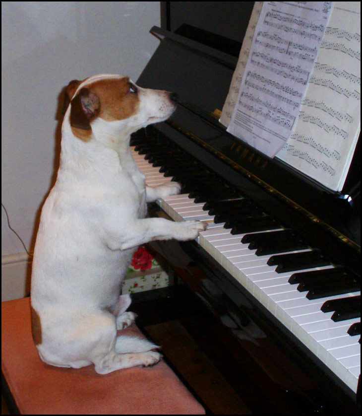 You hum it I'll play it