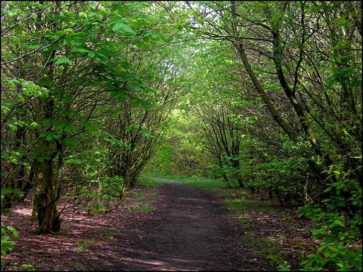 Crawfords Wood