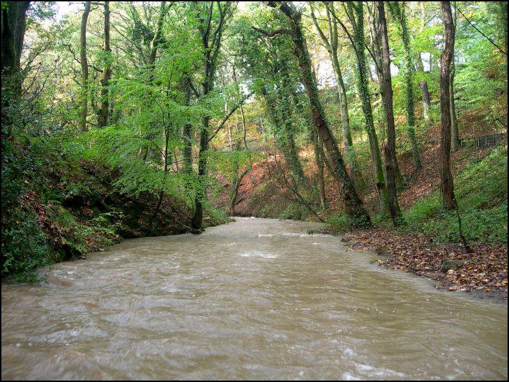 Borsdane Brook