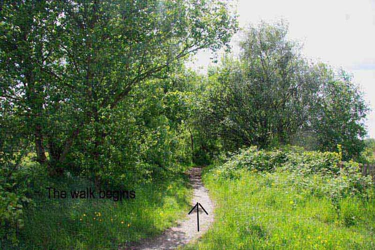 Beautiful walk, back of Whutchie in Aspull, May 2009