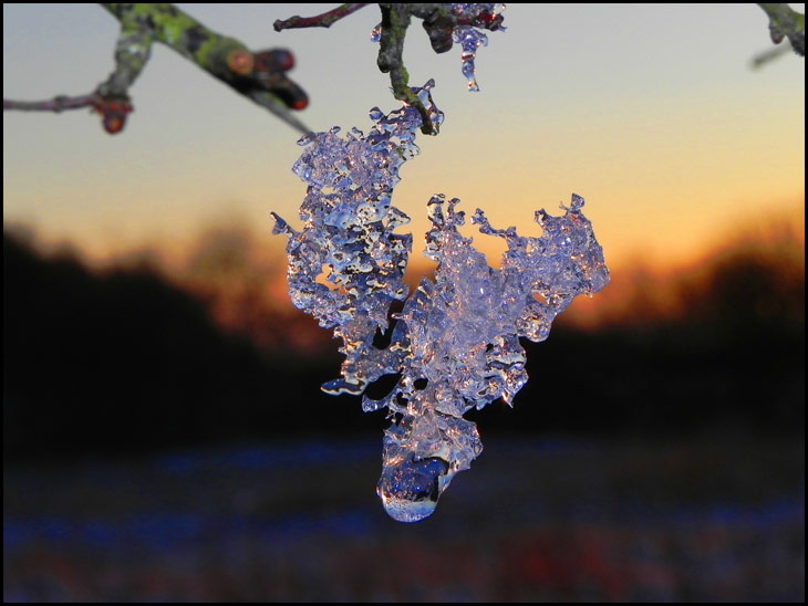 Sunset Frost