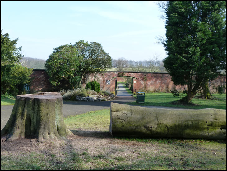 Felled Tree in the Walled Gardens
