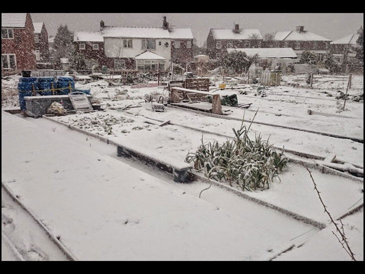 Allotment In Snow