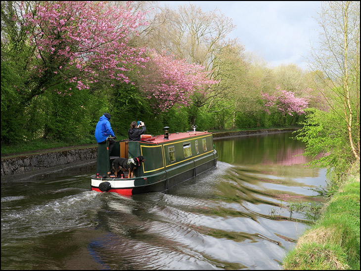Boat and blossom trees