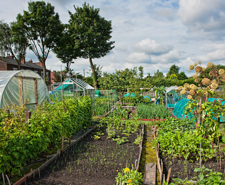 New Spings Allotments
